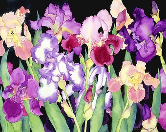 Purple Bearded Irises Watercolor Painting, Purple and Pink Flowers on Black Background Fine Art Print