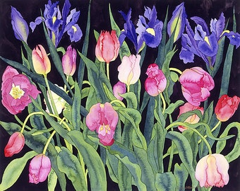 Dutch Blue Irises and French Pink Tulips Watercolor Painting, Spring Garden Flowers with Black Background Fine Art Print