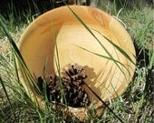 Large Wood Bowl - Sunlight Orange and Vibrant Yellow Large Serving Size Ponderosa Pine