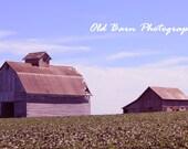 Two Barns- 11x14
