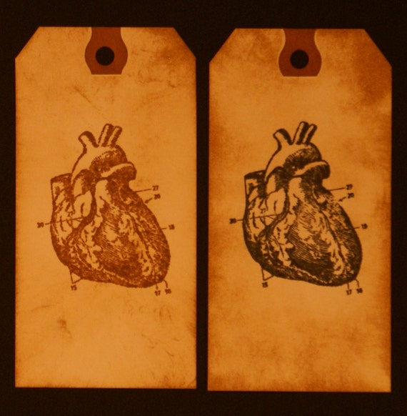 Anatomical Heart Gift Tags (Toe Tags)