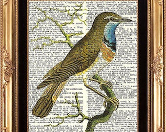 Bird Vintage Dictionary Print Beautiful Antique Illustration Picture Book Page Art Room Wall Decoration Bedroom Living Room Office Dining