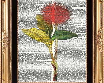 ANTIQUE FLOWER - Vintage Dictionary Print to Frame Beautiful Red Fluffy Tropical Plant Nature Interior Design
