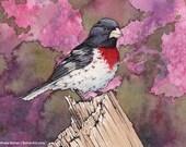 ORIGINAL Watercolor Painting of Rose-breasted Grosbeak, Bird Painting, Bird Art, Wall Art, Home Decor, Wildlife, Nature, Pink, FREE SHIPPING
