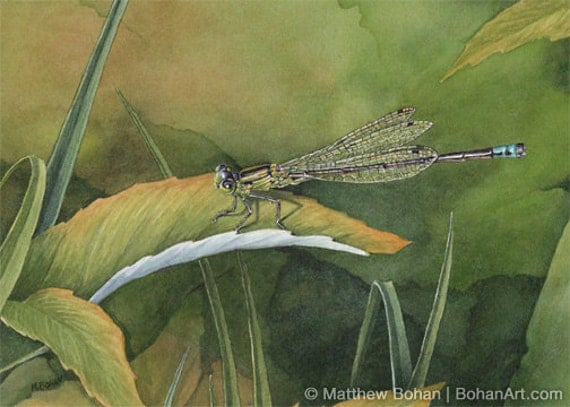 ORIGINAL Watercolor Painting of Eastern Forktail Damselfly, Dragonfly, Wall Art, Home Decor, Nature Wildlife, Small Art, Green FREE SHIPPING