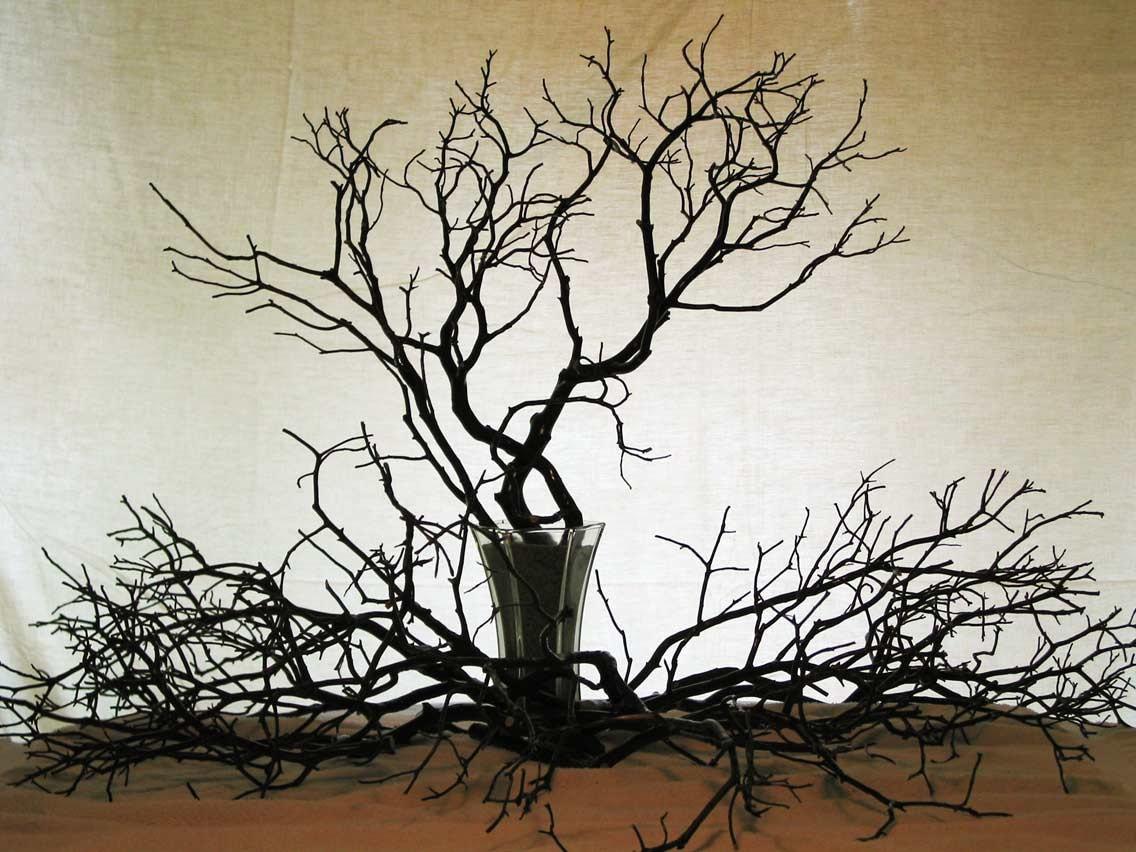 Pcs beautiful manzanita branches to inches