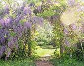 Secret Garden, Wisteria Vines, Purple Flowers, Arch, Bokeh