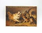 Victorian Trade Card - Hood's Sarsparilla Advertising Card