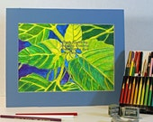 Sun Flower Bud Drawing Colored Pencil