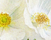 Two White Poppies - Duo of White Flowers exotic flower white photography wall art home decor theartisangroup