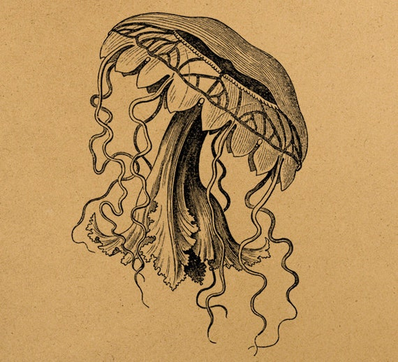 Vintage jellyfish illustration - photo#29