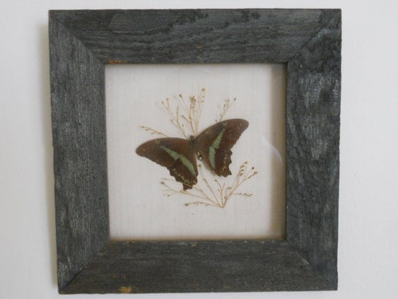 Framed Butterfly Wall Decor Picture Rustic Shabby Chic Cottage Art Gray Wood Frame