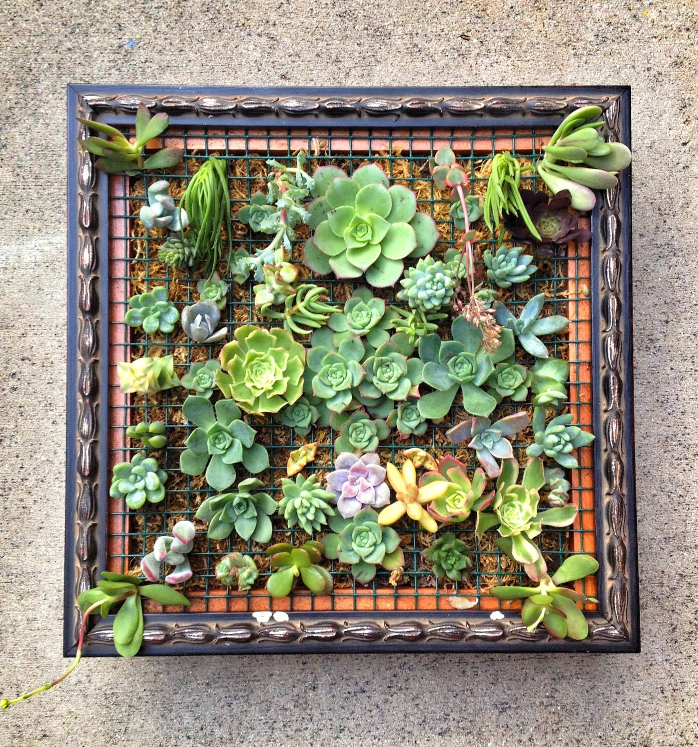 custom framed succulent wall art by localtimber on etsy