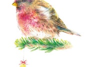 Christmas Postcard Bird 2