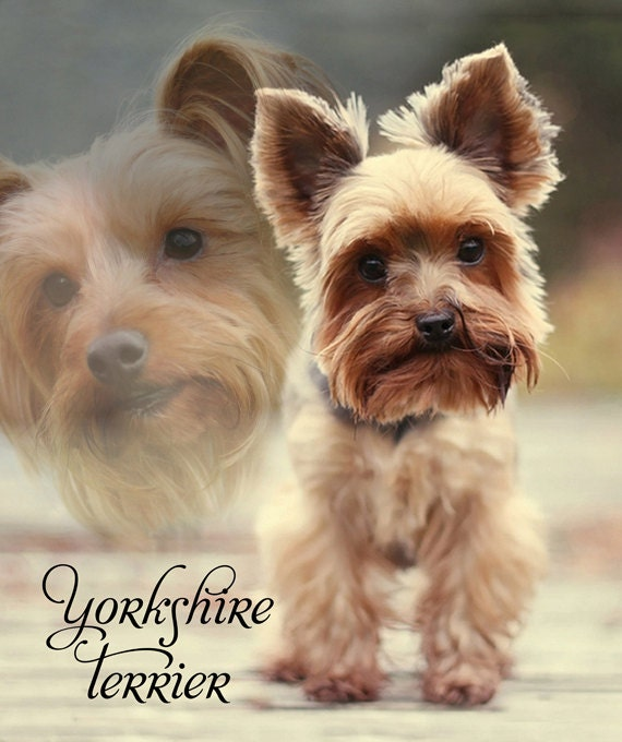 Fleece Blanket Yorkshire Terrier Yorkie Soft Blanket