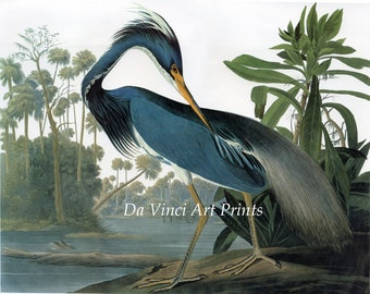 John James Audubon Reproductions - Birds of America, Louisiana Heron, 1827-1835. Fine Art Print.