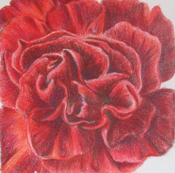 Red Carnation - RESERVED for esmith3728