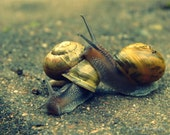 Snail Friends Digital Image