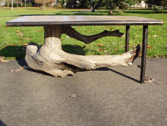 Juniper Stump Table with reclaimed clear Fir top, and reclaimed oak stabilizing legs.