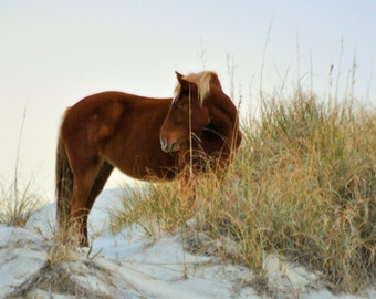 8x10, Fine Art Print,Horse, Eqine,country, home decor,spanish mustang, Outer Banks, Currituck, Wild horse,Beach