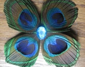 Peacock feather butterfly