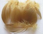 Mallard Barred Feathers - Dyed Woodduck