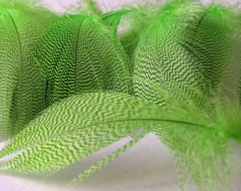 Mallard Barred Feathers - Dyed Chartreuse