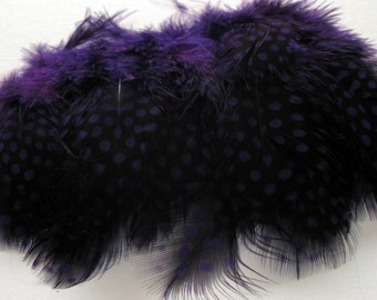 Strung Guinea Fowl Feathers - Purple