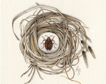 watercolor painting nest beetle insect OOAK