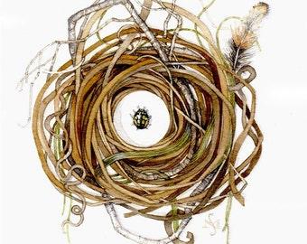 original watercolor painting nest spotted beetle OOAK