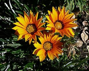 Flower, Yellow, Orange, Trio 5x7