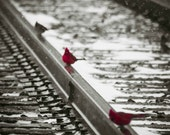Fine Art Photography Print- Cardinals Resting On Train Track- 8x10