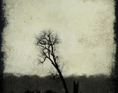 Fine Art Photography Print - Lonesome - 8x10