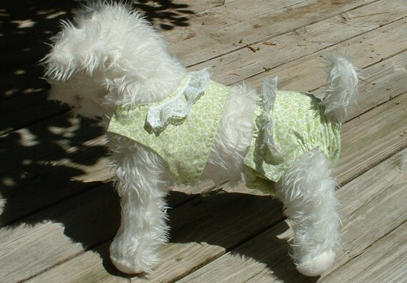 Panty n Jacket for Pet    -     Dog Clothing & Accessories     -     Canine Dog Jacket w Panties w Lace