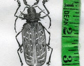 Unknown Beetle Wood Engraving Print with mount