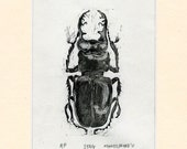 Stag beetle artist's proof wood engraving hand printed original in black and white