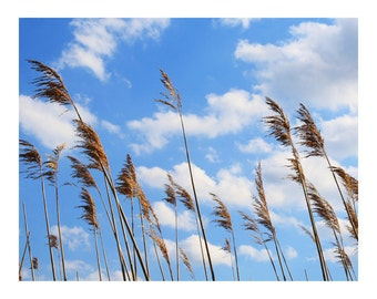 Wild Grass in Wind, Photo Print