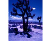 Joshua tree in the desert color infrared fine art photograph print 4x6