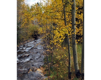 Aspen trees with stream fall colors fine art photograph print 4x6