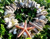 Natural Driftwood Shell Beach Wreath