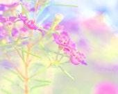 Sunny winter days and Geraldton Wax flowers like Fireworks - 12 x 18 Fine Art Photography Giclee Art Print