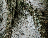 """New York Grit: Silver tree. 24""""x16"""" fine art photo fittingly mounted on wood."""
