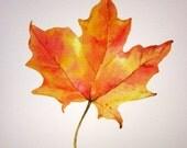 "Giclee Print of Original Watercolor Painting ""Maple Magic"""