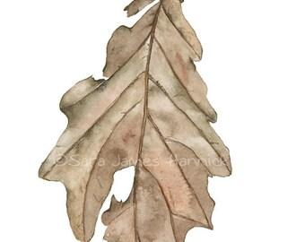Botanical Watercolor Painting Autumn Oak Leaf Brown Sepia Umber