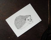 "Hedgehog Drawing - ACEO - Original Drawing - ""Hedgehog"""