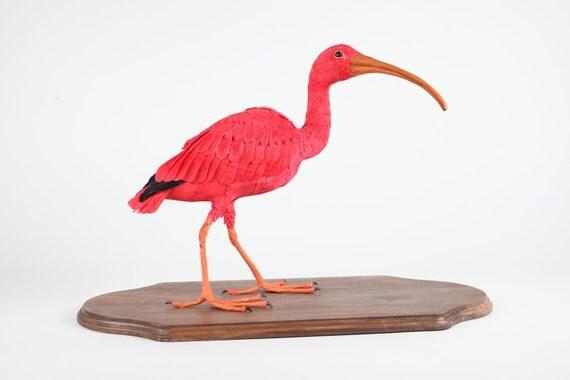 Scarlet Ibis   --Eudocimus ruber  2011