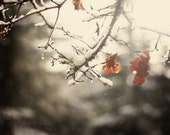 beautiful morning snow 8 by 10 winter fine art photography