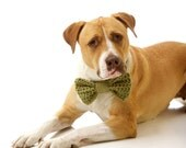 The Large Pretty Bow: Doggie Bow Tie - shown in Springtime Green - available in over 30 colors