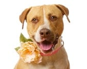 Soft Peach Floral Canine Collar Corsage for Dogs, Wedding Flowers