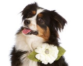 Whimsical Jeweled Floral Wedding Dog Collar Corsage